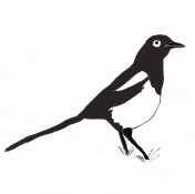 vogel_ekster_zwart
