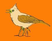 vogel_leeuwerik_oranje