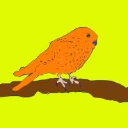 vogel_torenvalk_geel