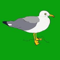 vogel_zilvermeeuw_groen