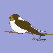 vogel_zwaluw